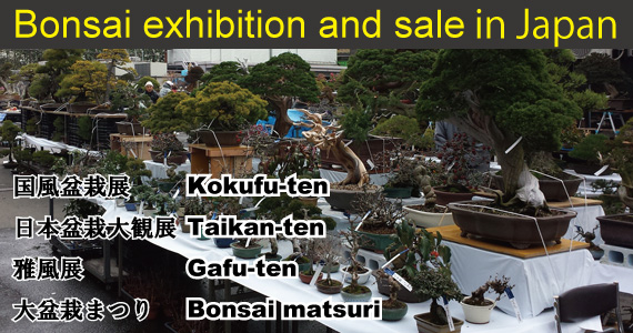 Bonsai exhibition and sale in Japan